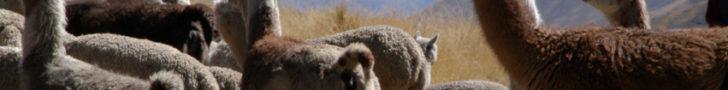 Alpacas-728x90