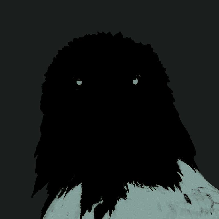 Bald-eagle-face-768x768